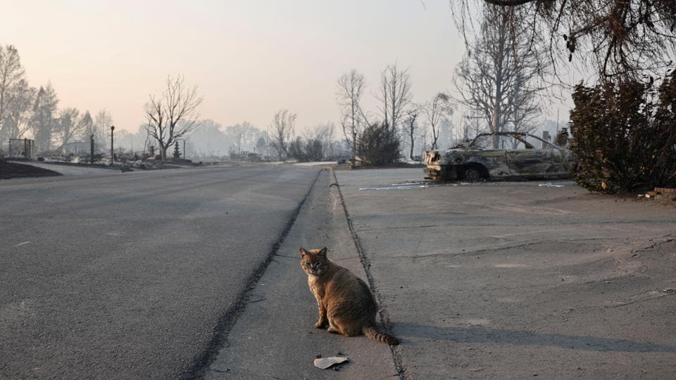 A cat sits on the street near a burnt car in a neighbourhood affected by fires after wildfires destroyed an area of Phoenix, Oregon on September 10. At least half a million people have been forces to evacuate from their homes due to wildfires in the state of Oregon as large swathes of western  Unites States remains engulfed in flames. (Carlos Barria / REUTERS)