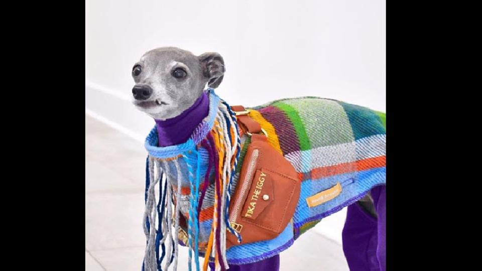 The superstar dog has its own Instagram account filled with images of her wearing fabulous clothes.
