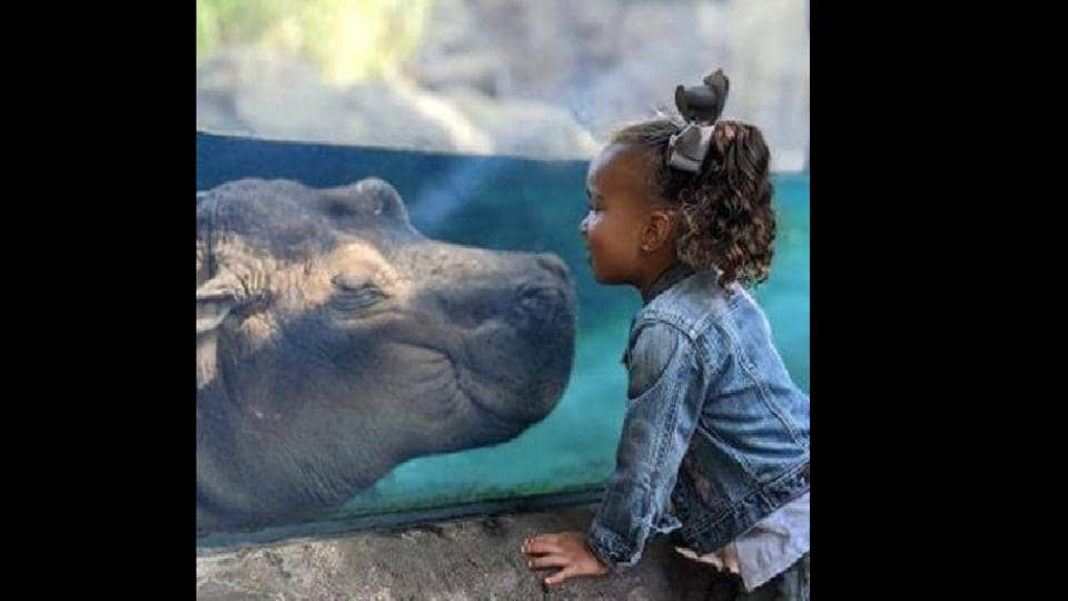 Featuring one of the famous members of the zoo, Fiona the hippo and an adorable toddler, the photo is very cute.
