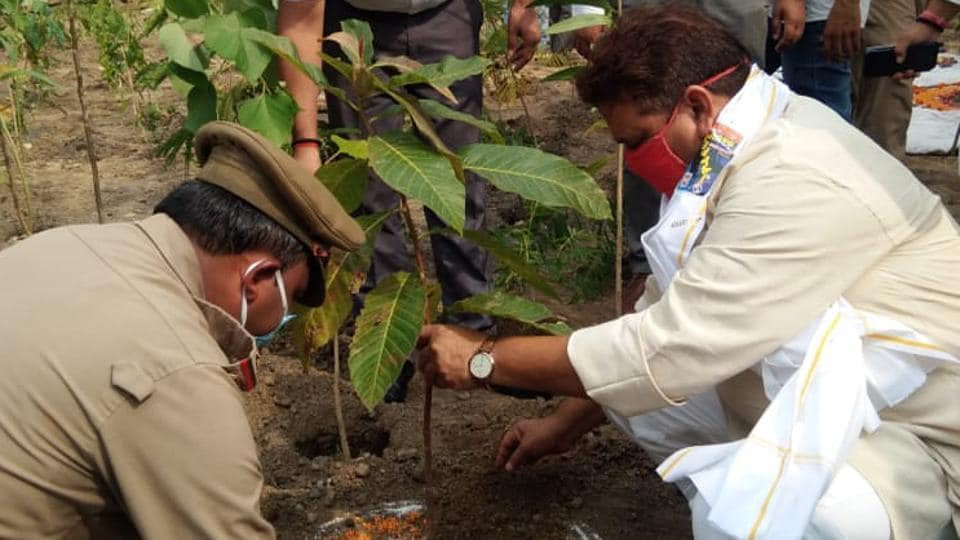UP minister Ravindra Jaiswal planting a sapling in the upcoming three-layered forest on the Ganga banks near Domri village in Varanasi
