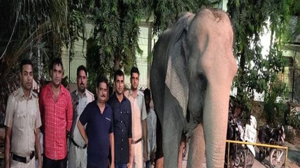 Delhi's last elephant, Lakshmi, who hogged the headlines when she went missing last year, completed a year in her new home.