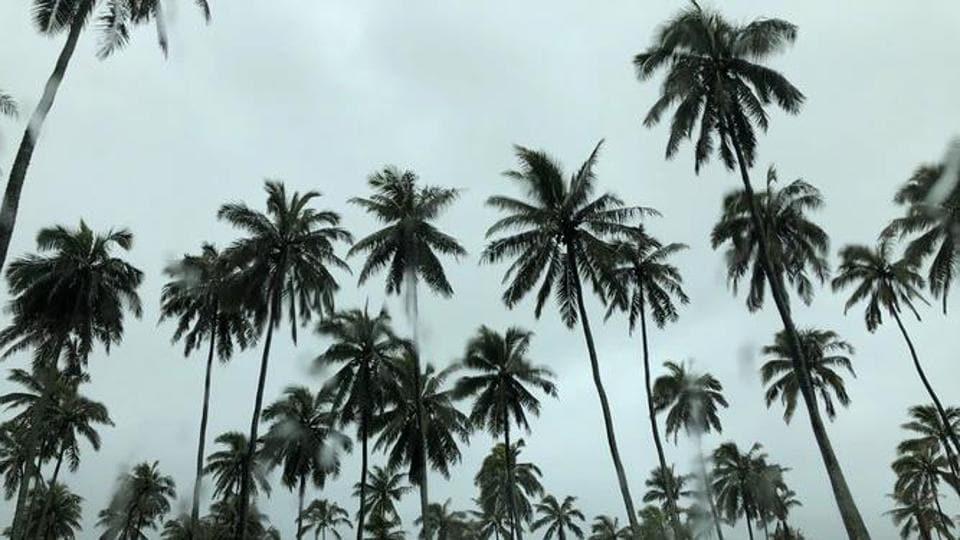 The image shows coconut trees. (Representative image)