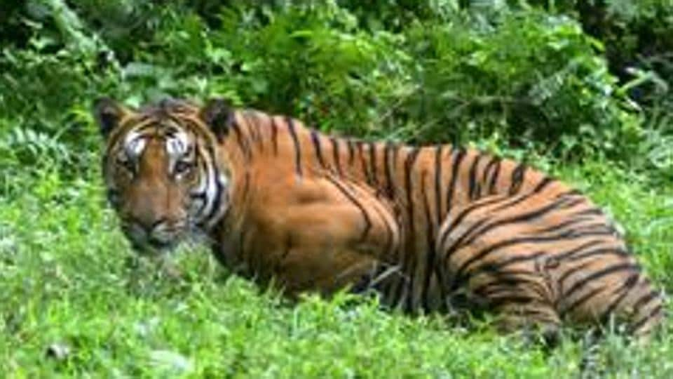 West Bengal has six national parks, 12 wildlife sanctuaries, two tiger reserves, two elephant reserves and a biosphere reserve.