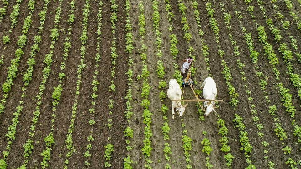 """Shiv Sena alleged that the Centre introduced Bills on agriculture """"without consulting"""" its allies,farmers' organisations or opposition parties. In this photo, a farmer ploughs his cotton field at Paritala, near Vijayawada."""
