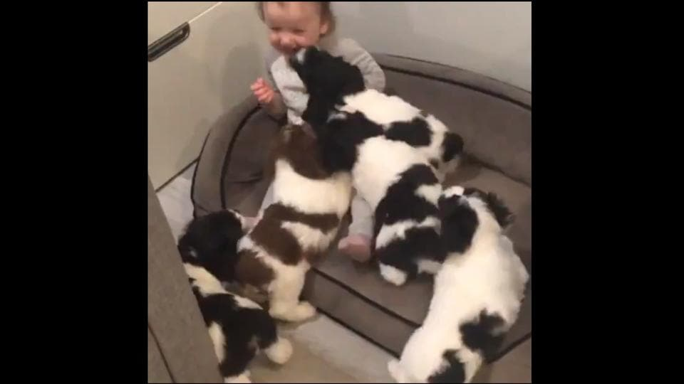 The clip shows a toddler along with five puppies.