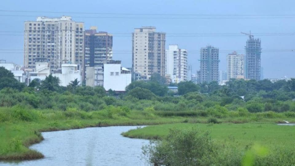 MTDC to hand over 500-acre mangrove area in Manori-Gorai to Maharashtra forest department
