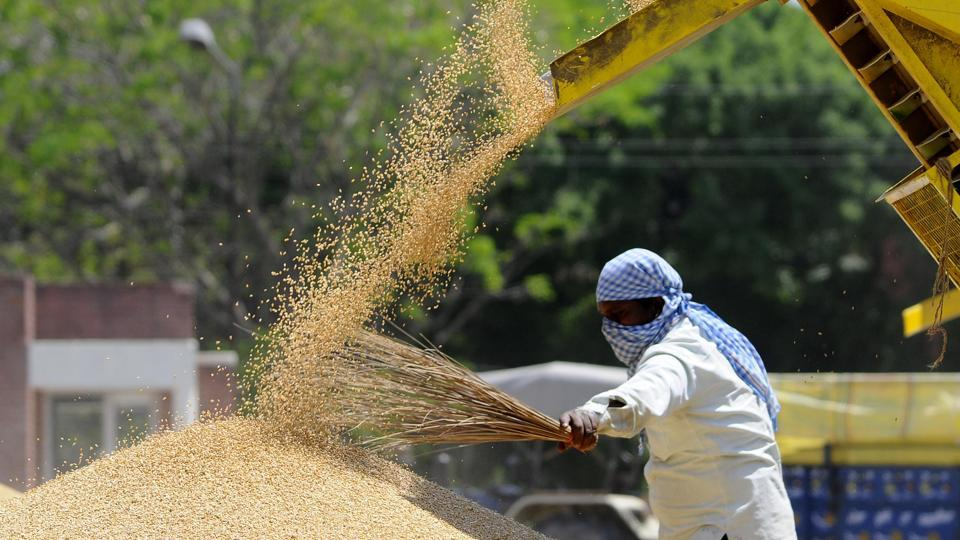 File photo: A worker during procurement process of wheat at a grain market.