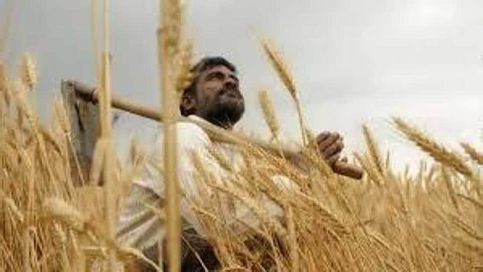 As per the data, the percentage of hike in MSP for wheat has been reducing since 2018-19.