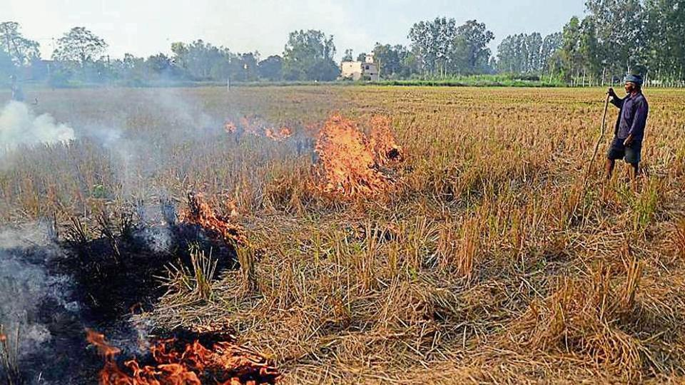 Delhi government data shows that in 2019, stubble burning in the northern states of Punjab and Haryana accounted for 44% of air pollution in the national capital.