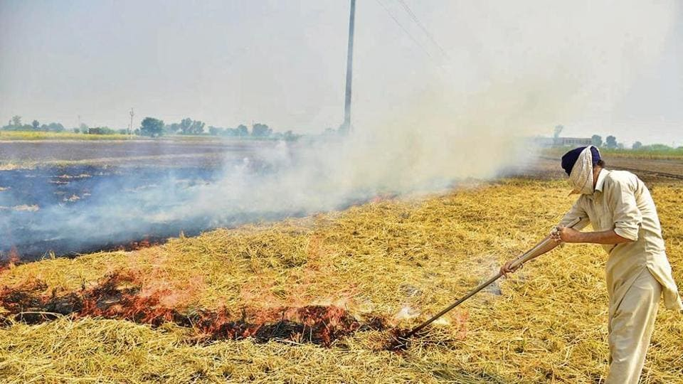 Delhi government data shows that last year stubble burning accounted for 44% of the city's air pollution.