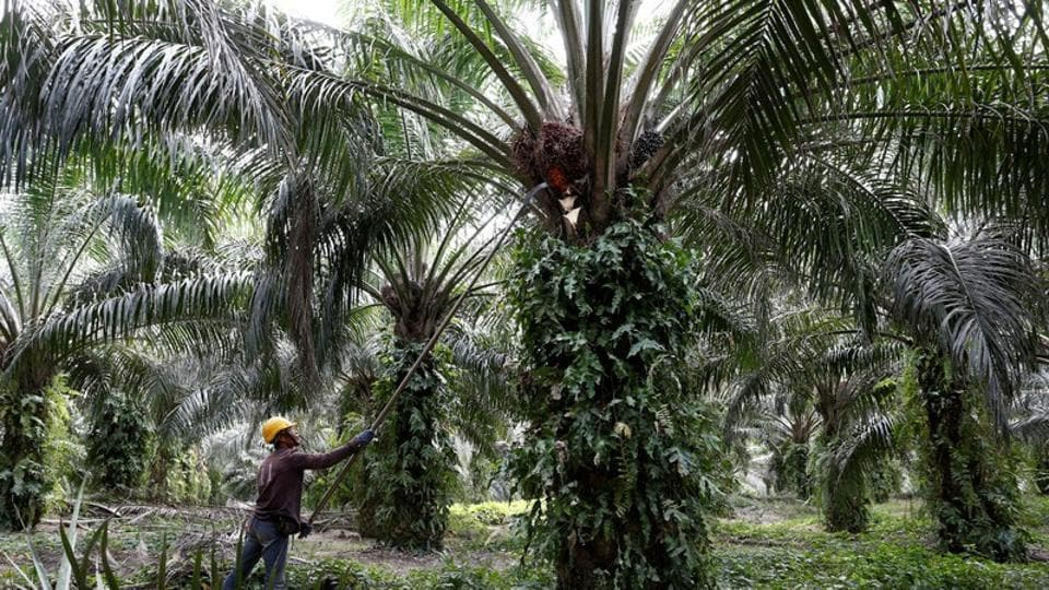 MoEFCC officials said increasing area under oil palm cultivation would contribute to a rise in forest cover but it has worried agriculture and environmental experts.
