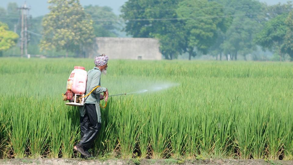 A farmer sprays fertilizer on his paddy crop, at Village Sidhuwal, in Patiala, Punjab on September 18, 2020.