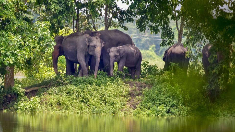 The rising human-elephant conflicts and loss of habitats and corridors are key issues discussed with states for the action plan. Officials said they want coordinated efforts to reduce human-animal conflict through mitigation works in elephant corridors