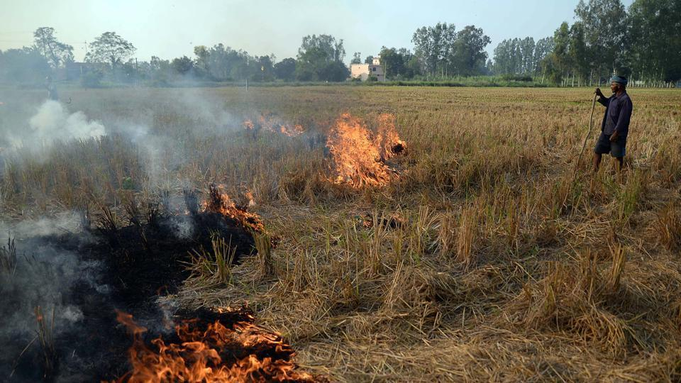 Stubble being burnt as part of 'slash and burn' agriculture practice after the harvesting of paddy crop in Jalandhar, Punjab.