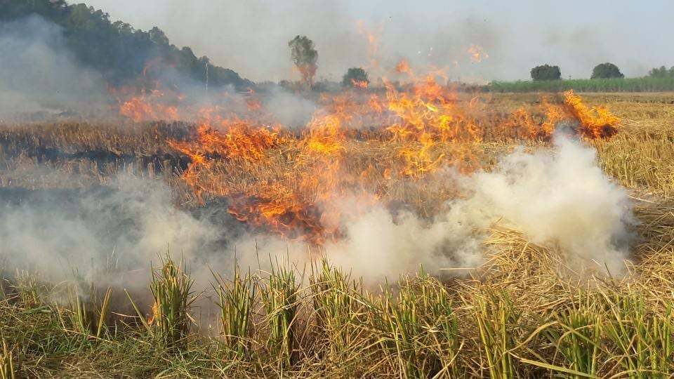 As per government data, in 2019, stubble burning in Haryana and Punjab had contributed to 44% of the pollution in the National Capital Region.