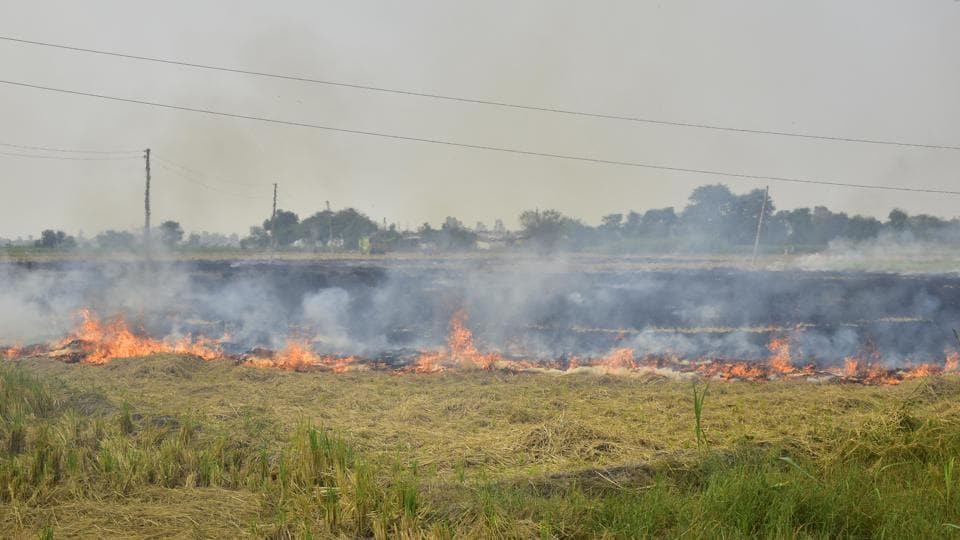 Straw stubble burning in a field after the paddy crop harvest, near Jandiala Guru in Amritsar, Punjab on Monday.
