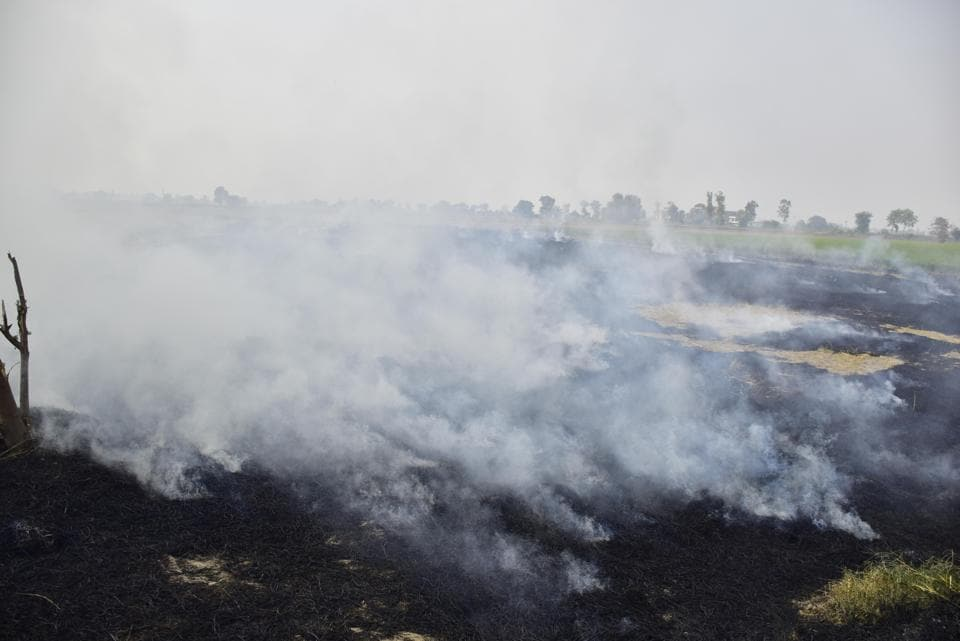 Smoke rises from straw stubble being burnt in a field after the paddy harvest. Farmers not using the Super Straw Management System (SMS) that chops the paddy residue and mixes it with earth to make mulch will be fined, the Mohali district administration announced on Tuesday.