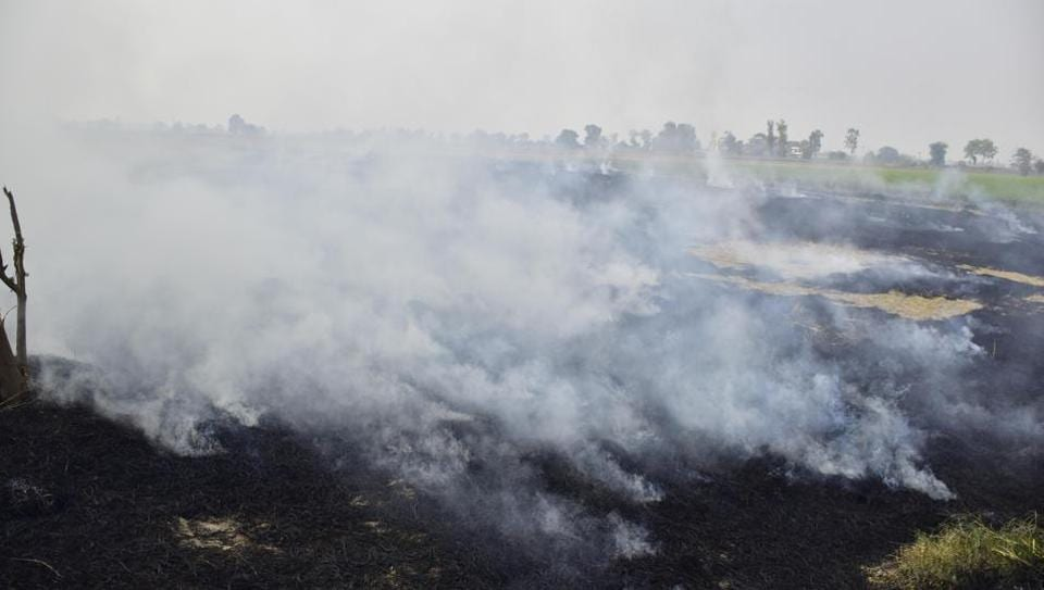 Smoke rises from straw stubble being burnt in a field after the paddy crop harvest, near Jandiala Guru in Amritsar, Punjab on Monday.