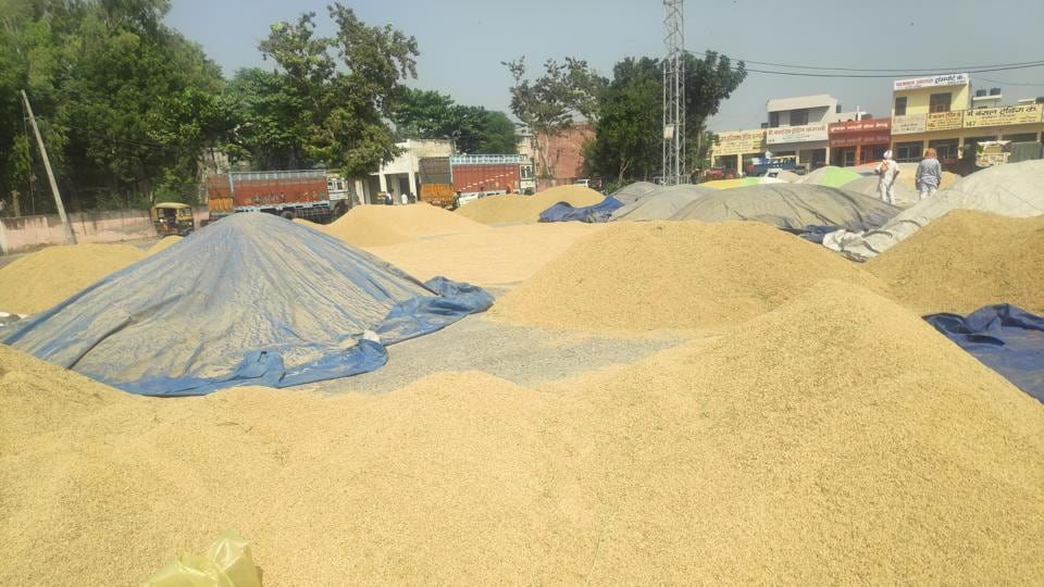 Unsold paddy piles up in the Pipli grain market of Kurukshetra district.