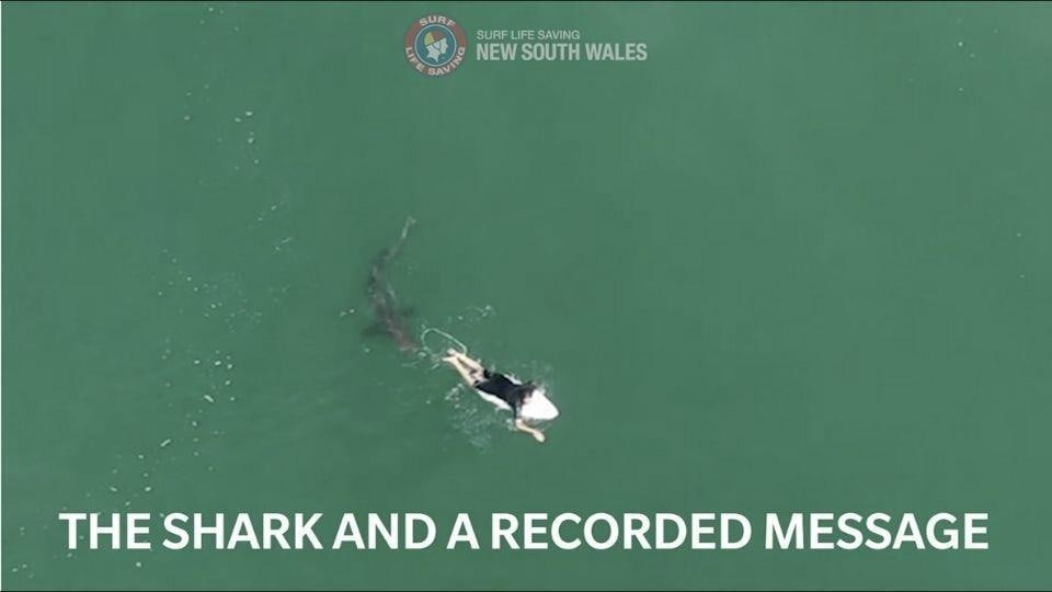 The image shows a shark and surfer Matt Wilkinson.