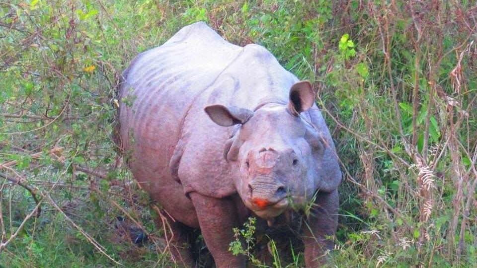 A one-horned rhino inside Kaziranga National Park.