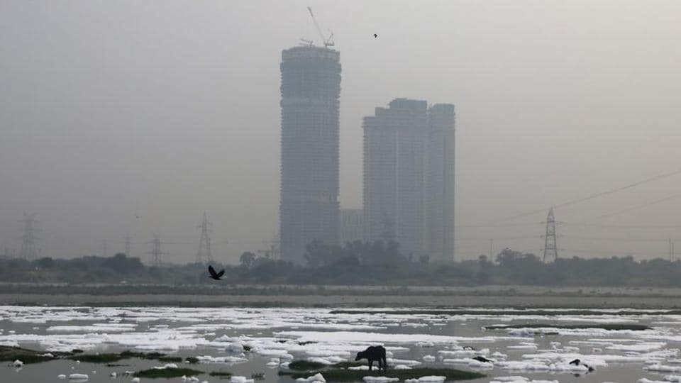 An animal is seen grazing in the polluted water of the river Yamuna, covered in foam during a hazy morning, in New Delhi.