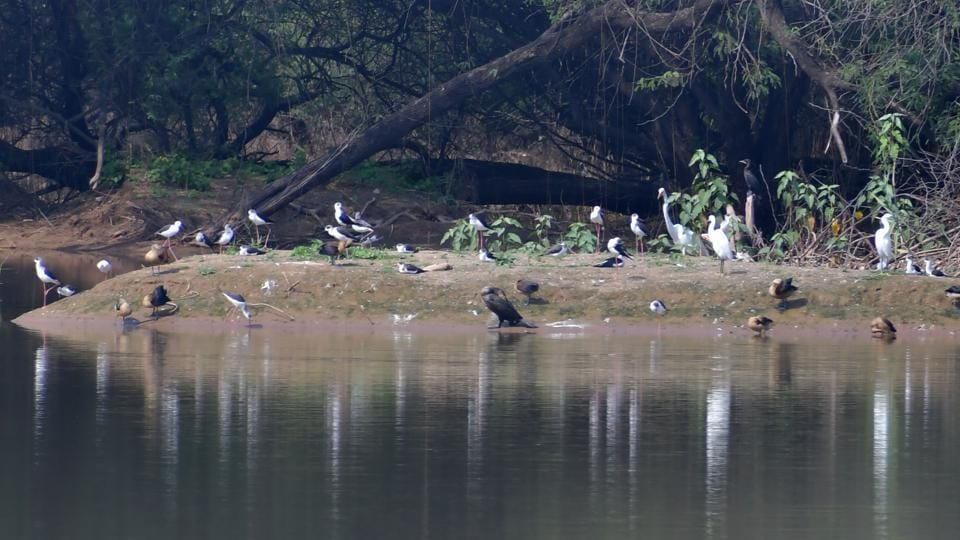 Resident birds enjoying the artificial isle at Sukhna lake.