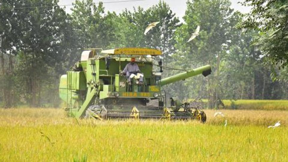 Punjab govt claims 3,56,516 farmers have been benefited by the  procurement process till Friday evening.