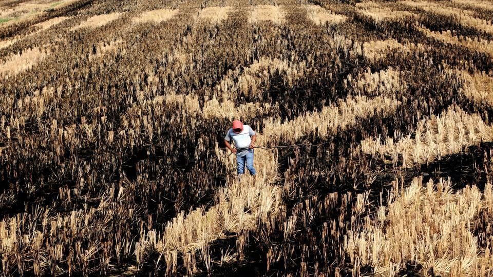 A farmer takes stock of a field after burning the straw stubble at Sanour village in Patiala, Punjab.
