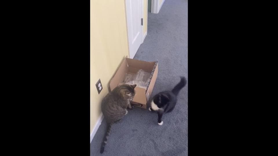 The image shows two cats.