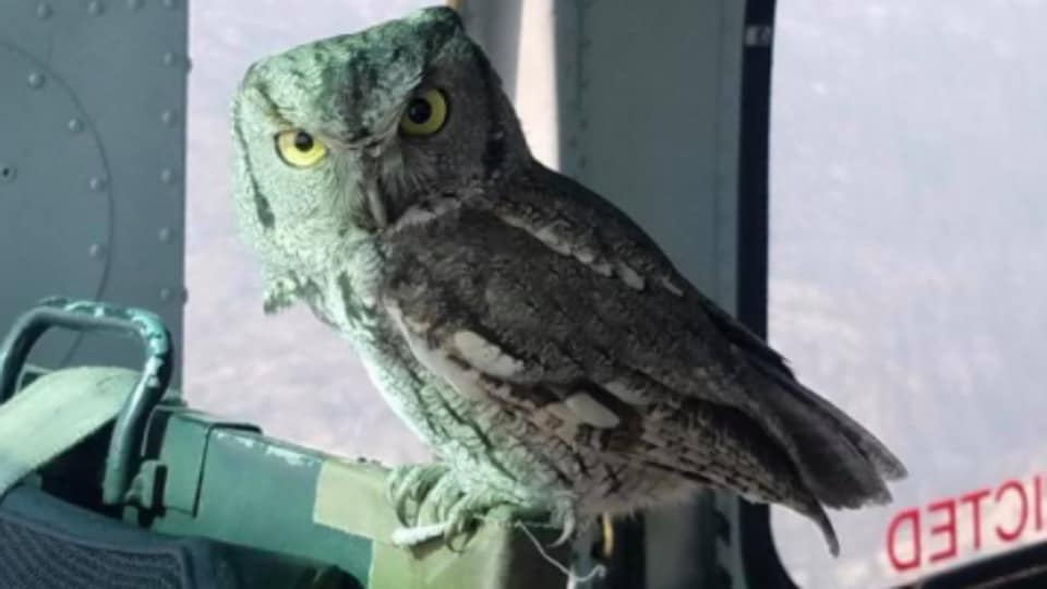 The owl entered the aircraft unexpectedly and left without any injury.