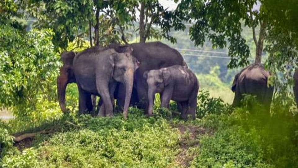 Eleven elephants have died in north Bengal so far this year, of which six due to electrocution