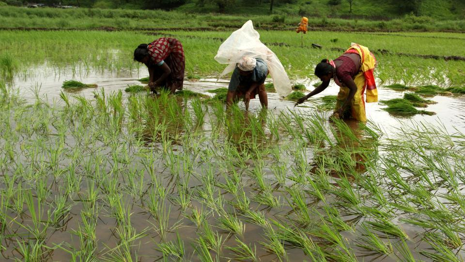 Rain-hit Maharshtra farmers stopped minister Vijay Wadettiwar's convoy to demand immediate government help