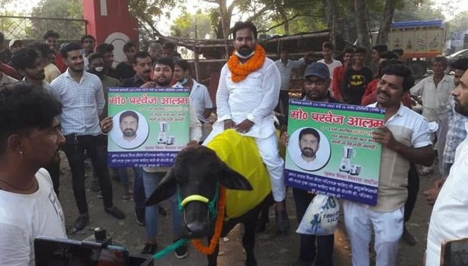 Mohammad Parvez Mansoori, a candidate of Rashtriya Ulema Council party from Gaya Town on Monday rode a buffalo for campaigning in his area.