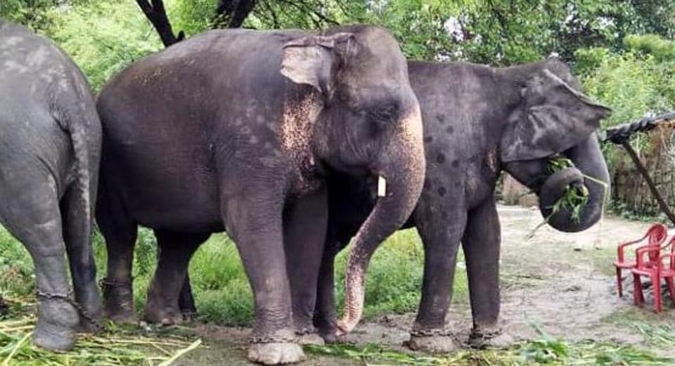 Rampant elephant attacks continue to claim lives in the area.