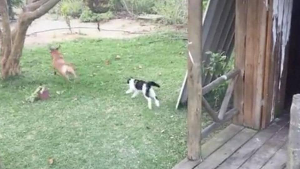 The image shows a cat and a dog.
