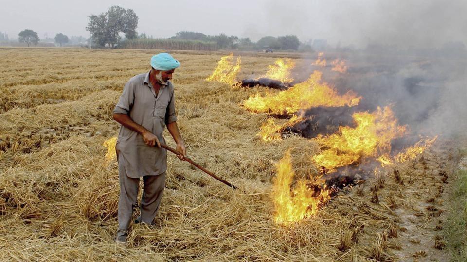 A farmer burns paddy stubble in a field in Patiala on October 22.