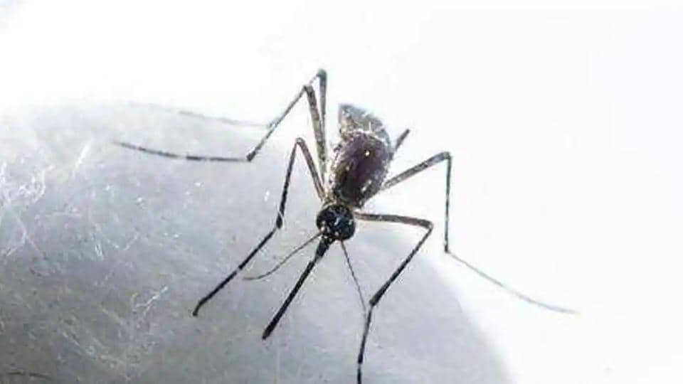 The Mohali health department had in September issued a warning that coronavirus and dengue co-infection may prove risky after detecting mosquito larvae at several places.