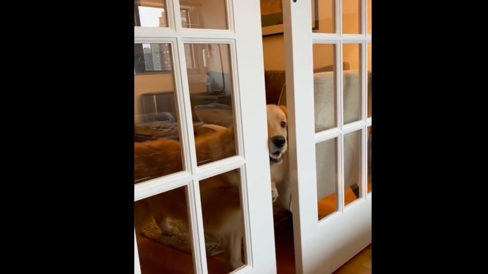 Nova working extremely hard to open a closed sliding door.