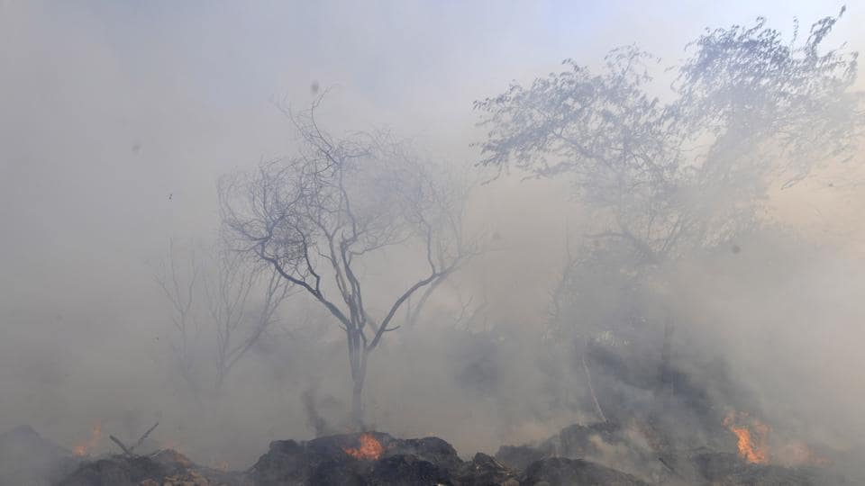 Noida: Smoke rising from a fire in shrubs in the forest at Sector 54 in Noida, Uttar Pradesh.