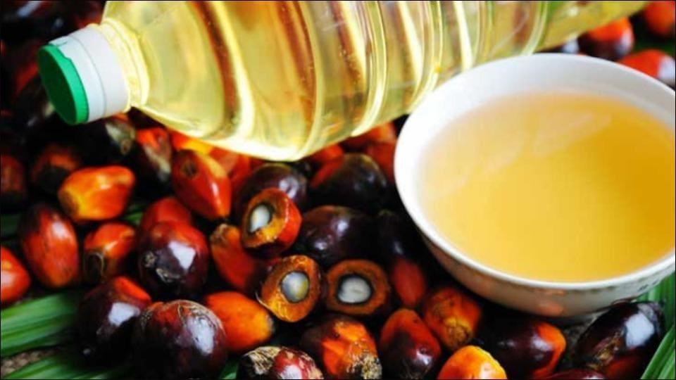 Vitamin E extracted from palm oil useful in boosting immunity? Read on to know