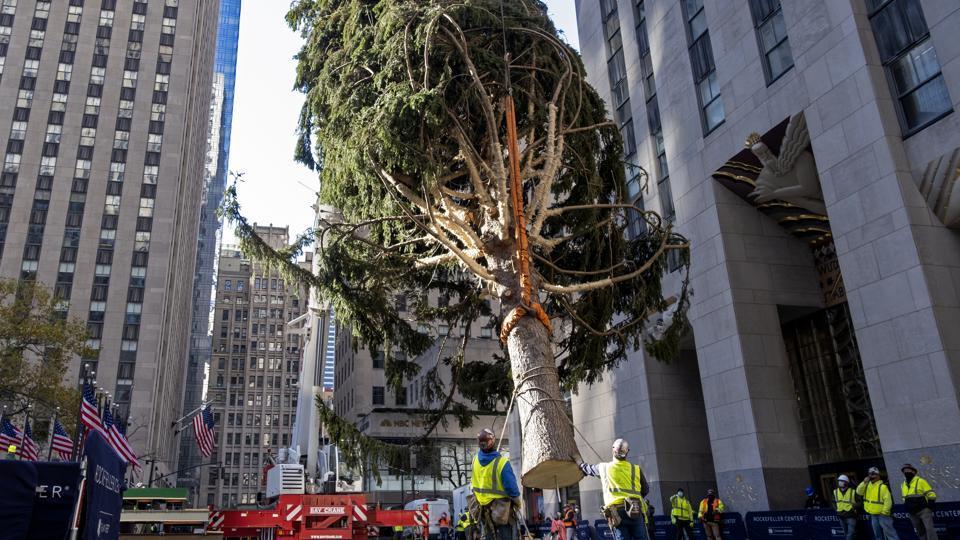 Rockefeller Christmas Tree 2021 Time 75 Foot Tall Christmas Tree Goes Up At Rockefeller Center New York Trending Hindustan Times