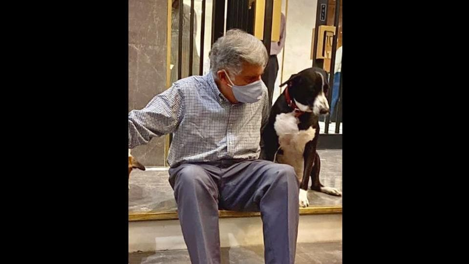 The image shows Ratan Tata with stray dogs.
