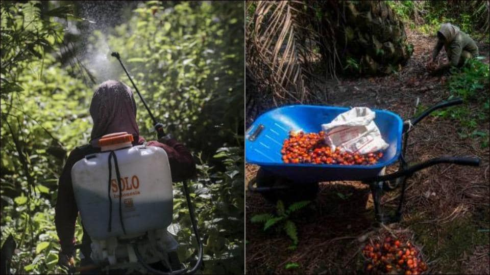 Sexual abuse in palm oil fields linked to top beauty brands in Indonesia