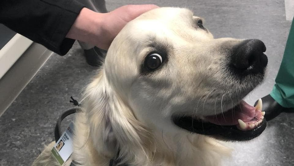 Photo of Hospital hires employee whose job is to greet others. It's an adorable dog