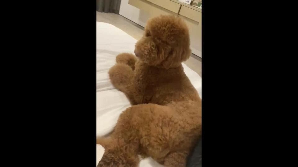 The image shows Chrissy Teigen and John Legend's pet dog, Pete, sitting on a bed.