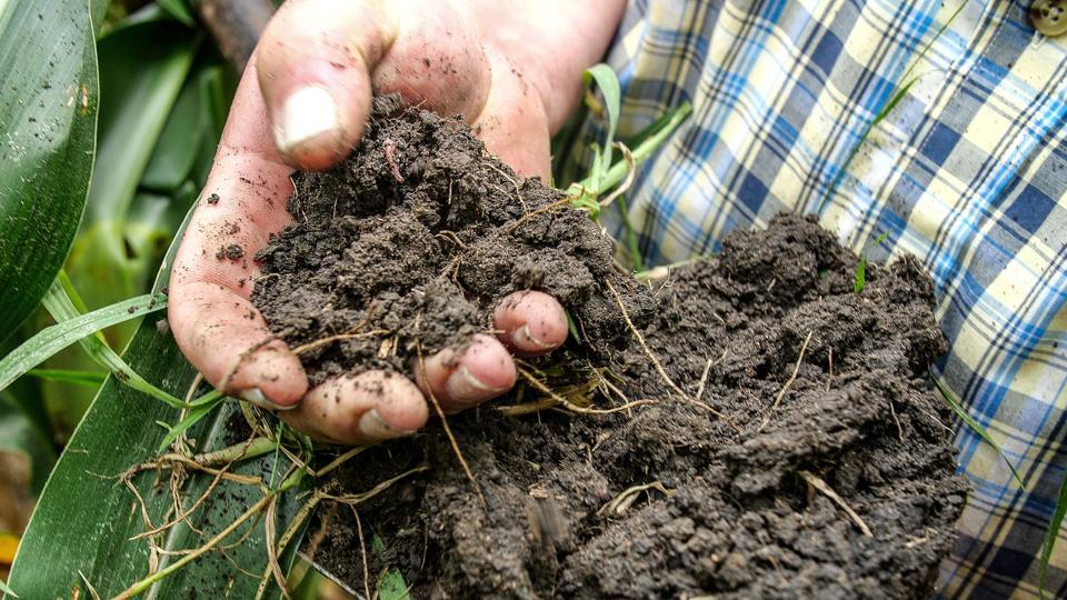 World Soil Day 2020: Theme, significance and history ...