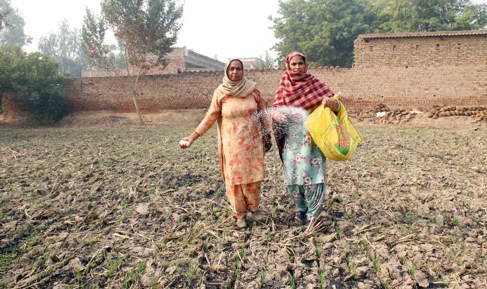 In Punjab, women take charge of their farms as menfolk take part in protests at Delhi border - Hindustan Times