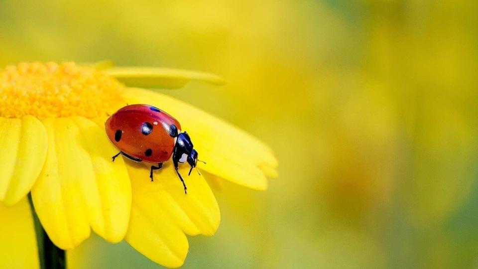 The list includes ladybug.
