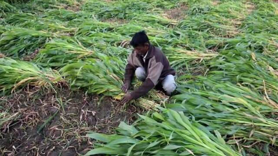Potato farmer Rakesh Singh in Uttar Pradesh said he is keen to get computer-enhanced tools to help his business in India's most populous state.